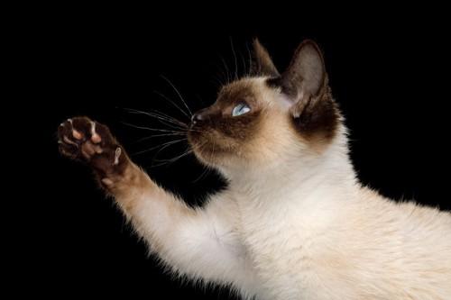 何かを目で追う猫
