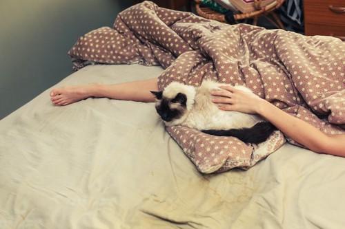 飼い主のスペースを奪って眠る猫