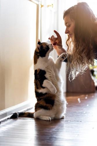 飼い主にお帰りをする猫