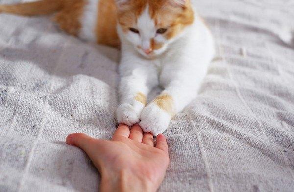 人間の手にタッチする白茶の猫