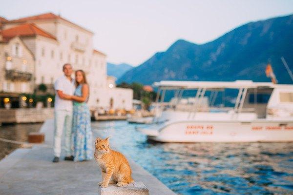 海岸の猫と人
