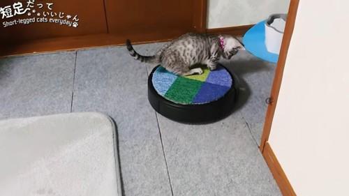 ロボット掃除機に乗る猫の後ろ姿