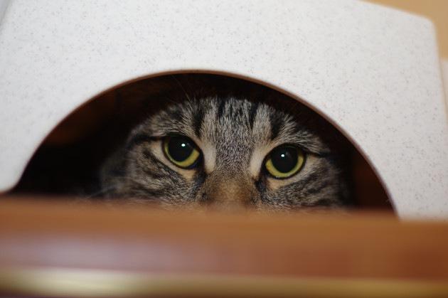 人見知りしている猫