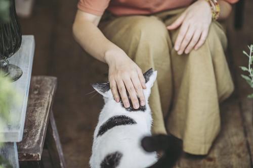 しゃがんで猫の頭を撫でる飼い主