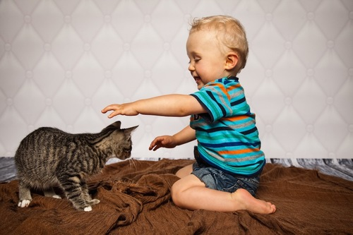子供に構われる猫