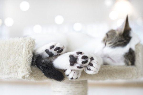 肉球が黒い寝る猫