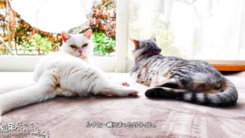 寝そべる2匹の猫