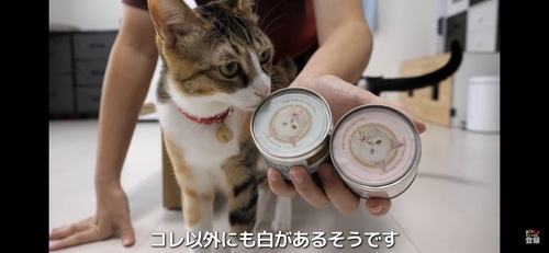 缶詰めが気になる猫