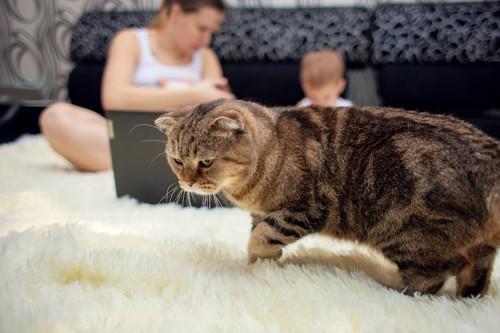 赤ちゃんの世話をする飼い主と不機嫌そうな猫
