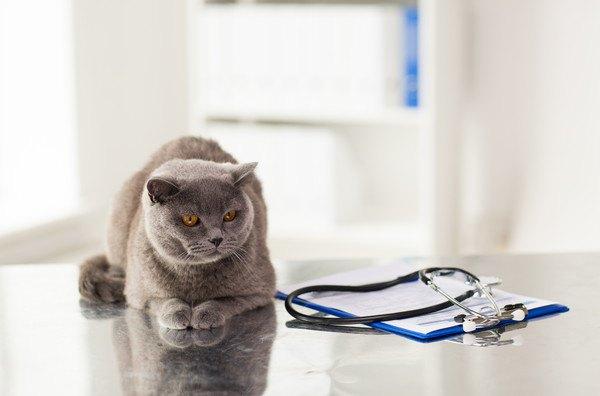 テーブルの上の猫と聴診器、カルテ