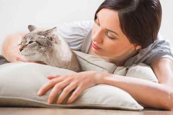 女性の顔を見ない猫