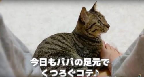 足元でくつろぐ猫