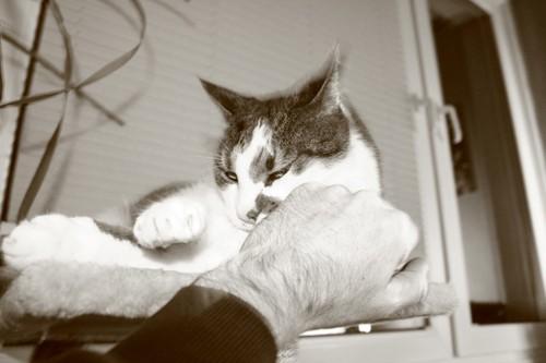 猫にパンチをする手と猫