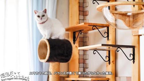 トンネルの上に座る猫