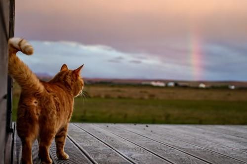 遠くに見える虹と猫の後ろ姿