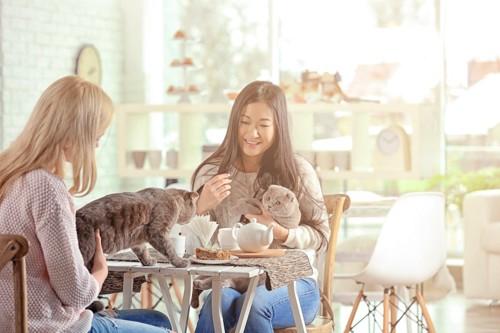 猫を抱いてお茶をする二人の女性