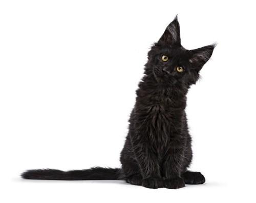 首をかしげる黒猫