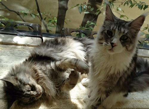 大地真央の2匹の猫