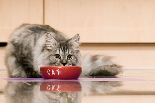 赤いフードボウルでご飯を食べる猫