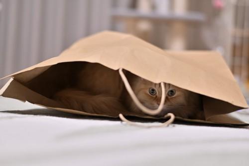 茶色の紙袋の中の茶トラ猫