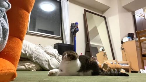 伏せて目を閉じる猫