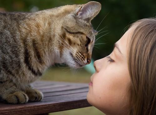 見つめ合う鼻の赤い猫と女の子