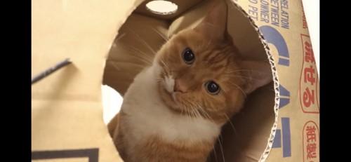 穴の中で首をかしげる猫
