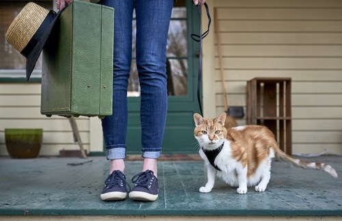 スーツケースを持った人とリードに繋がれた猫