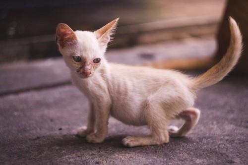 痩せた子猫