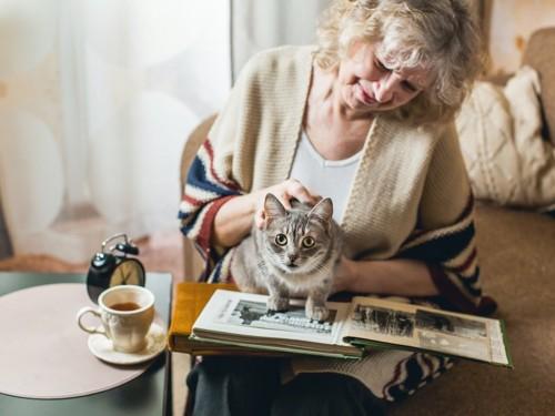 本を読む高齢女性の膝の上に乗る猫