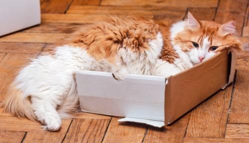壊れた箱に入る猫
