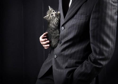 スーツに入り込もうとする猫