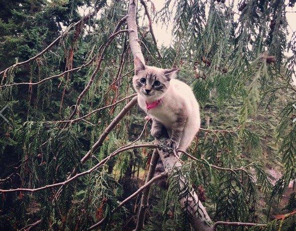 木の上で可愛く写る猫