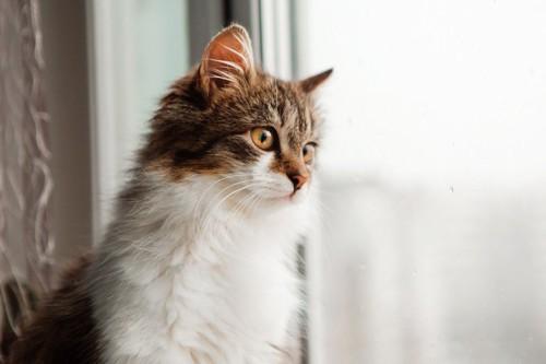 窓から外を見る子猫