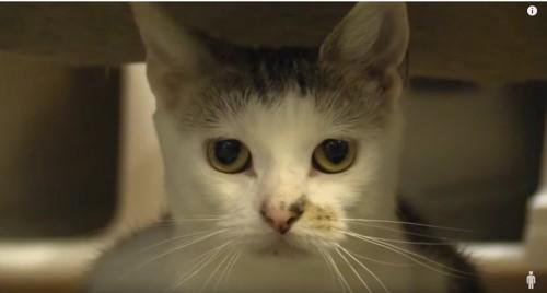 メス猫メリー
