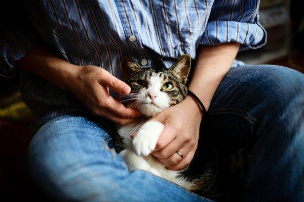 猫を撫でる風景