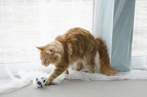 ネズミで遊ぶ猫