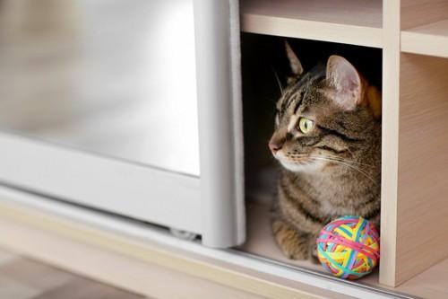 戸棚に入る猫