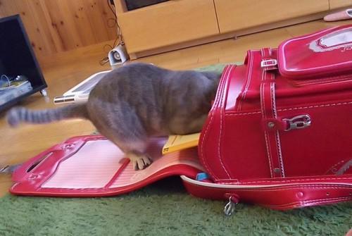 ランドセルをのぞく猫