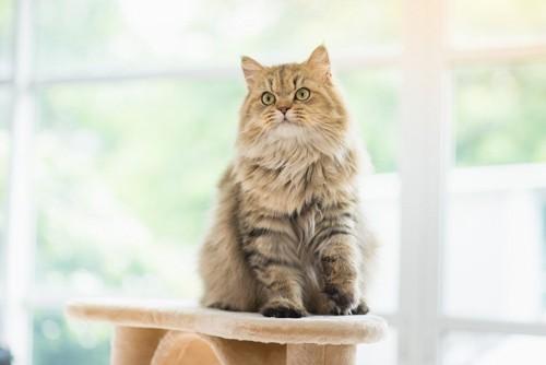 背筋を伸ばして座る猫