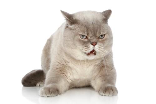 不服そうな猫