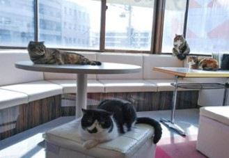 くつろぐ福猫茶房の猫たち