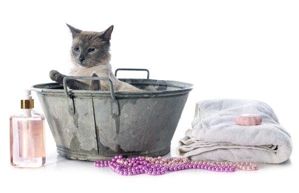 桶に入ったグレーの猫
