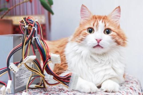 猫とコード