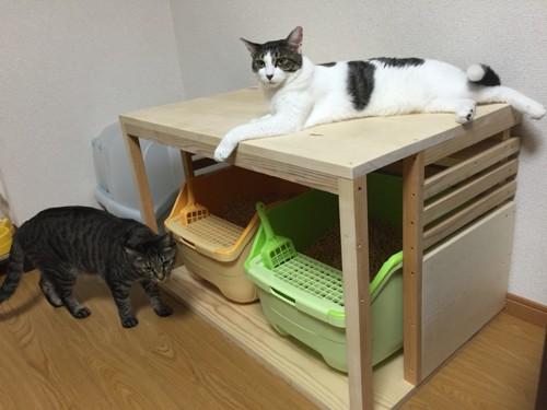 枠組みの出来たトイレでくつろぐネコさん達
