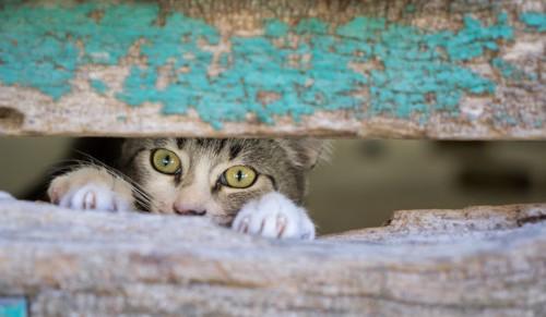壁の間から覗き見る猫