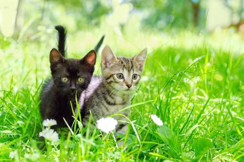 草むらの中で同じ方向を見る二匹の子猫
