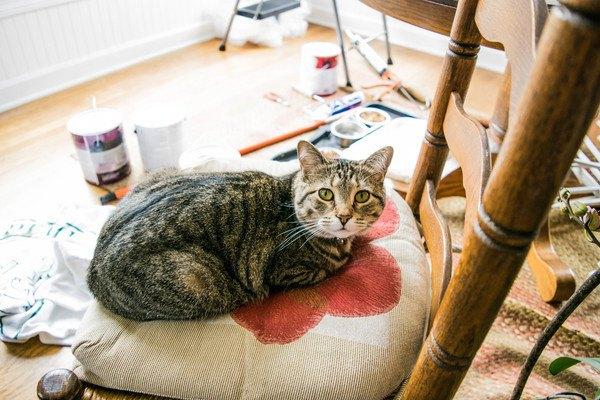 座布団に座る猫