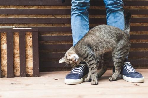 デニムの人にスリスリする猫
