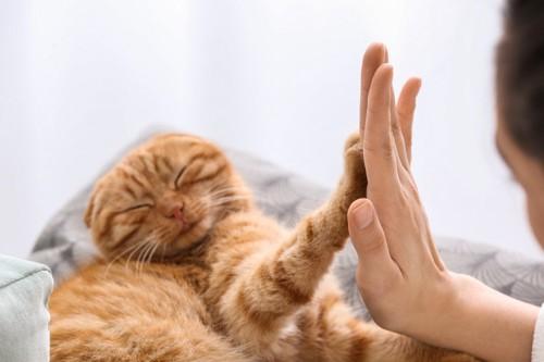 ハイタッチをする猫